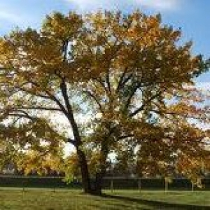 Baker & Son Tree Service