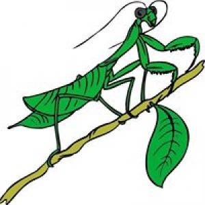 Abrock Pest Management