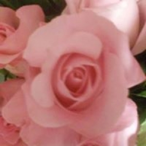 Affordable Floral