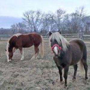 Babcock Hill Equestrian Center