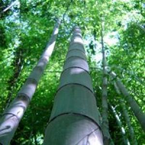 Bamboo Gardens of Louisiana