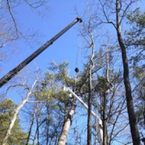 Hultgren Tree Service LLC