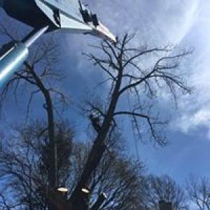 Ardmore Tree Service