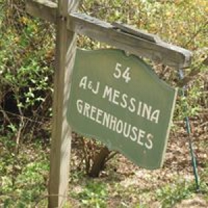 A & J Messina Greenhouses