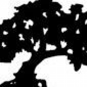 Northern Virginia Tree Experts