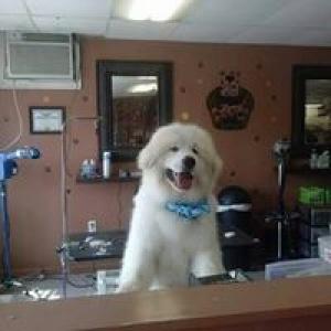 A Beautiful Dog Grooming