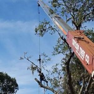 A Taylor Tree Company & Crane Rental