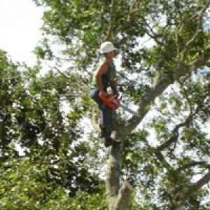 Tree Medic Tree Surgeons Inc.