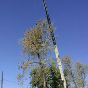 South Valley Tree Experts