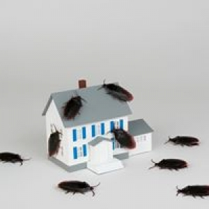 American General Exterminators