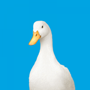 Aflac-Office of Leo Tisa
