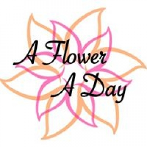 A Flower A Day