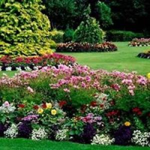 Cecilio Landscaping
