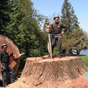 Ranger Tree Services