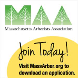 Massachusetts Arborists Association