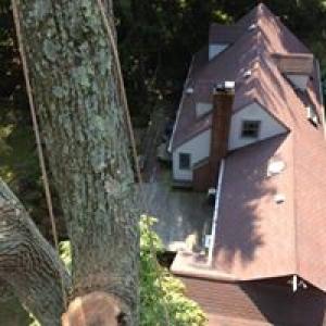 Any Cut Tree Service Inc