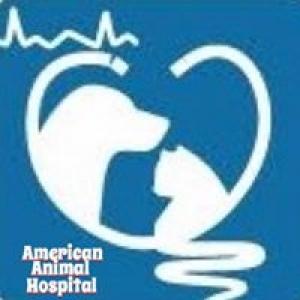 American Animal Hospital of Randolph