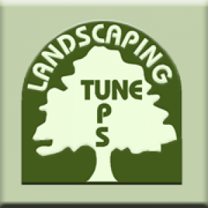 Landscaping Tune-Ups