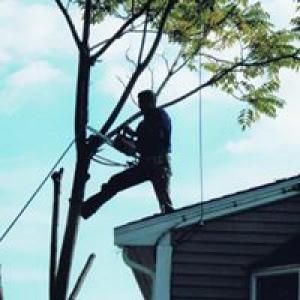 Nardone Tree Service