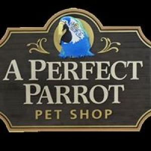A Perfect Parrot Pet Shop