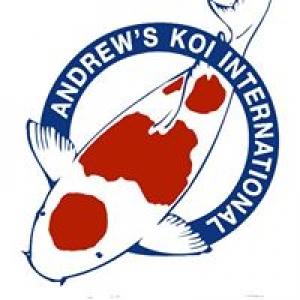 Andrew's Koi Internatl
