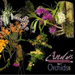 Andy's Orchids