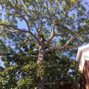 Tri-State Tree Svc