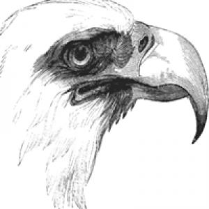 Eagle Painting & Pressure Washing