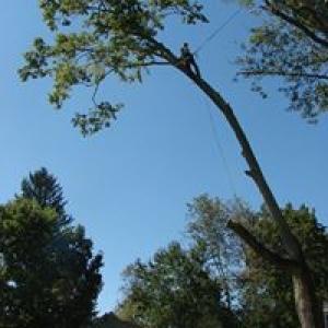 Basic Tree Care & Landscaping