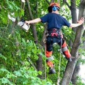 J & R's Tree Service
