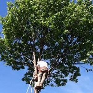 Torpy Tree Service