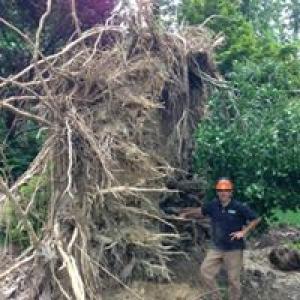Arbol Tree Service