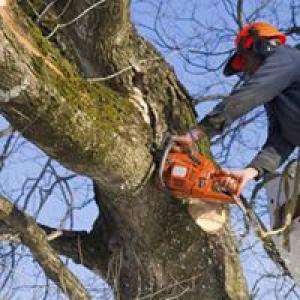 Lumberjack Tree Service