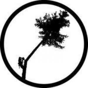 Alaska Tree Tops