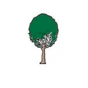 Tree Life 1