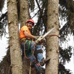 All Seasons Tree Service