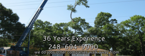 Royal Oak Tree Service