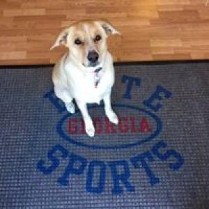 Elite Sports Georgia