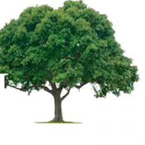 H & H Tree Service