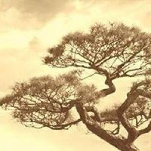 Knoll & Sons Tree Service