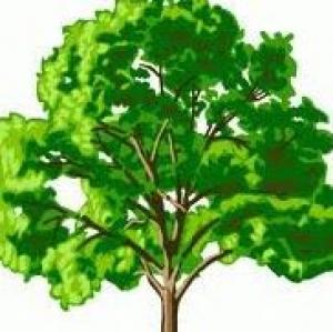 4 Seasons Tree Service