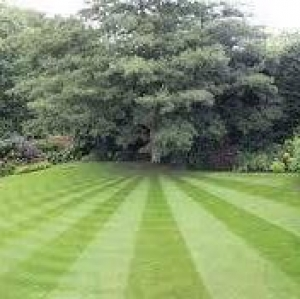 Pitts lawn and Tree Service