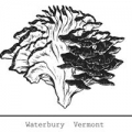 Hen of the Wood-Waterbury