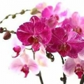 Orchid and Hydroponic Supply