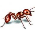 ACE Pest Management