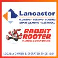Rabbit Rooter