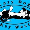 Lazy Dog Adventures