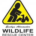 Wildlife Rescue Center Of The Hamptons Inc