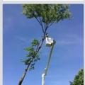 Bobby's Tree Service