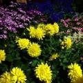 Breedlove Nursery & Landscape Co